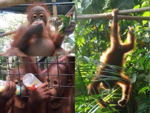 Project Borneo Orang-Oetans Deel 1 (8) | Rowena Goes Ape