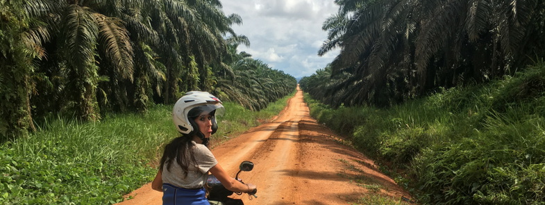 Project Borneo Orang-Oetans Deel 1 Blog Thumbnail 785x295