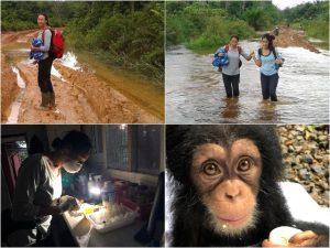 Terug Limbe Kameroen Blog   Rowena Goes Ape (1-2-3-4)