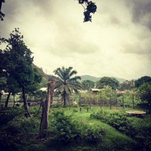 Terug Limbe Kameroen Blog | Rowena Goes Ape (5)