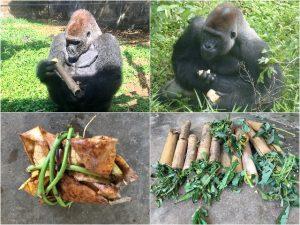 Pinda's Honing Kameroen Blog   Rowena Goes Ape (1-2-3-4)