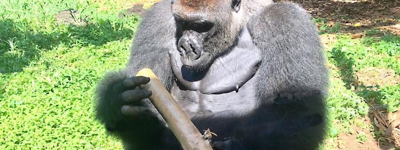 Pinda's Honing Kameroen Blog Thumbnail 785x295 | Rowena Goes Ape
