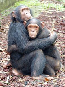 Limbe Wildlife op de valreep Blog | Rowena Goes Ape (4B)