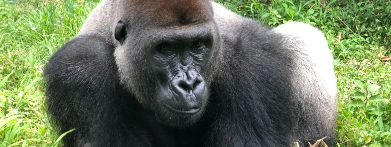 Limbe Kameroen April 2019 Blog Thumbnail 785x295 | Rowena Goes Ape