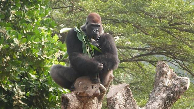 Achter de schermen Rescue Centers Blog | Rowena Goes Ape (10)