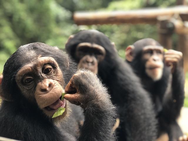 Achter de schermen Rescue Centers Blog | Rowena Goes Ape (9)