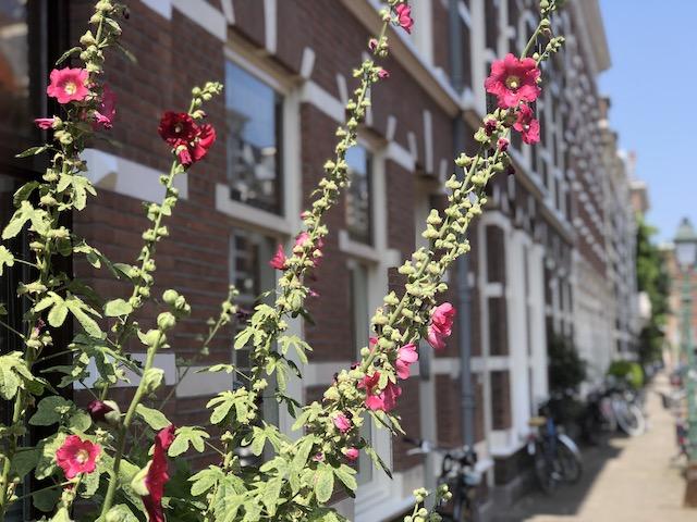 Stad Roze Bril Blog | Rowena Goes Ape (1)