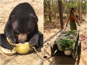Future for Nature Blog | Rowena Goes Ape (1-2)