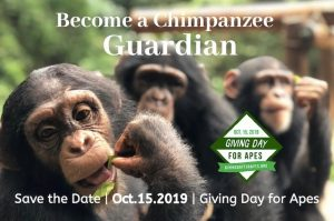 Tacugama Giving Day for Apes 2019 Blog | Rowena Goes Ape (2)