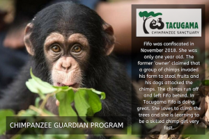 Tacugama Giving Day for Apes 2019 Blog   Rowena Goes Ape (5)