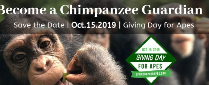 Tacugama Giving Day for Apes 2019 Blog Thumbnail 785x295 | Rowena Goes Ape