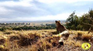 Lionsrock Blog | Rowena Goes Ape (1)
