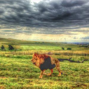 Lionsrock Blog | Rowena Goes Ape (3)