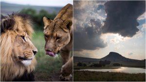 Lionsrock Blog | Rowena Goes Ape (4-5)