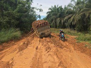Bos in Borneo Blog   Rowena Goes Ape (3)