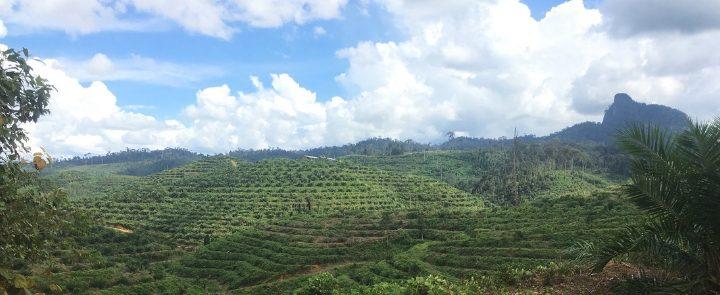 Bos in Borneo Blog Thumbnail 785x295 | Rowena Goes Ape