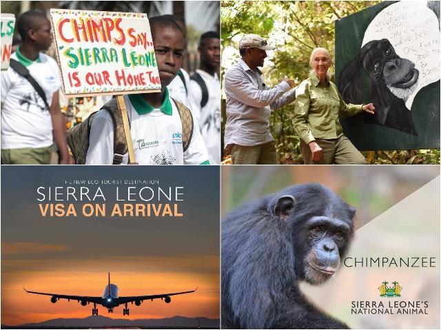 Sierra Leone Chimpansee Blog | Rowena Goes Ape (2-3-4-5)