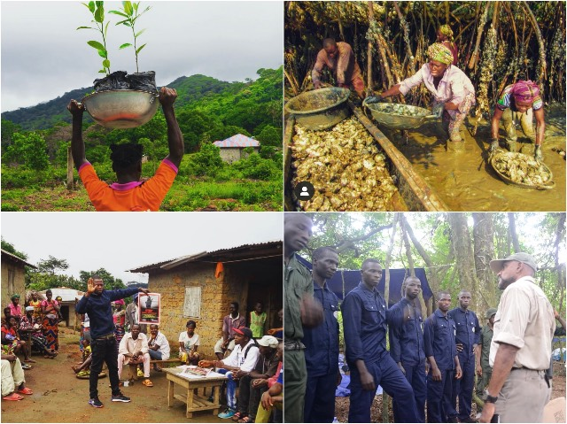 Sierra Leone Chimpansee Blog | Rowena Goes Ape (6-7-8-9)