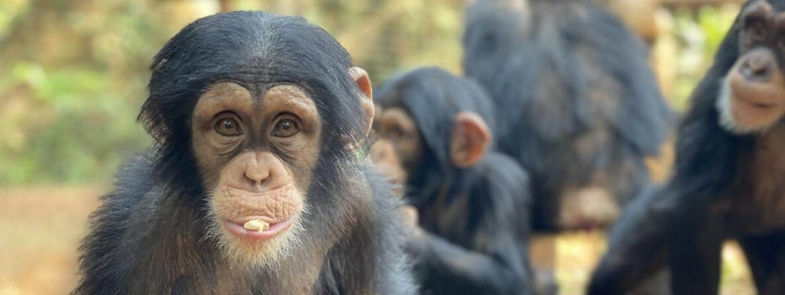 Animals Today Blog Thumbnail 785x295 | Rowena Goes Ape