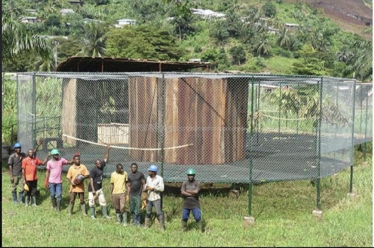 Limbe Kameroen Papegaaien Blog | Rowena Goes Ape (3)