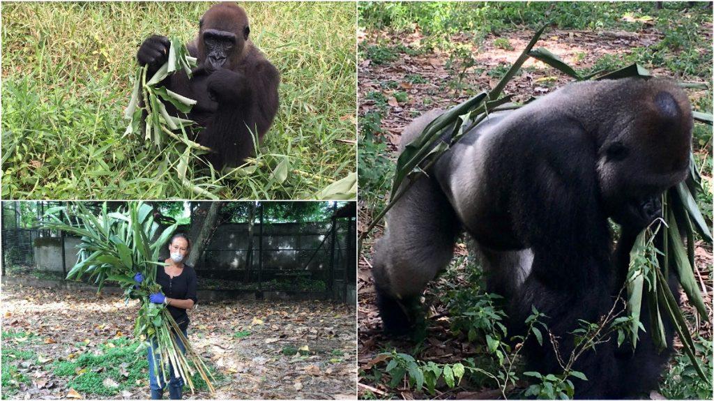 Groen Project Limbe in Kameroen Blog | Rowena Goes Ape (1-2-*)