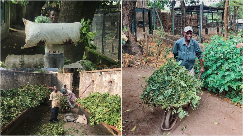 Groen Project Limbe in Kameroen Blog | Rowena Goes Ape (3-4-*)