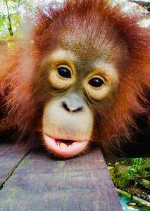 Werken in een opvangcentrum voor wilde dieren   Rowena Goes Ape