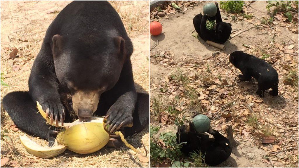 Werken in een opvangcentrum Free the Bears | Rowena Goes Ape (1-2)