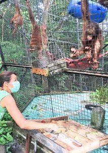 Werken in een opvangcentrum voor wilde dieren | Rowena Goes Ape (5) 10,5x14,8 cm