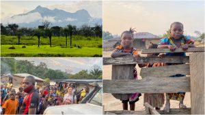 Opvangcentra weer beetje open voor vrijwilligers Blog | Rowena Goes Ape (3-4-5)