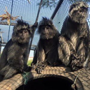 Werken-in-een-opvangcentrum-Bali-Wildlife-Rescue-Center-Rowena-Goes-Ape-1