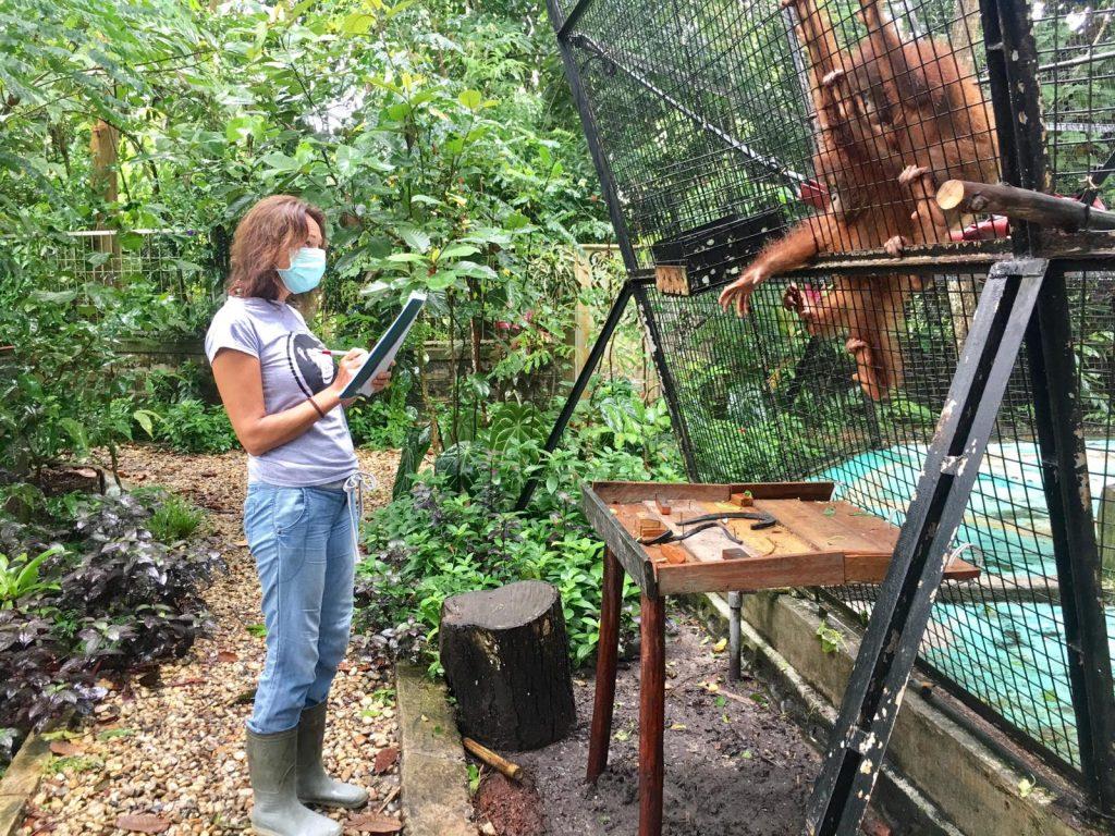 Werken in een opvangcentrum Sintang Orangutan Center | Rowena Goes Ape (6)