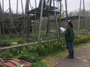 Werken in een opvangcentrum Stichting AAP | Rowena Goes Ape (2)